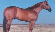 The Top Deck Sire Line - Mr Jess Perry