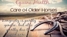 Equine Health: Care of Older Horses