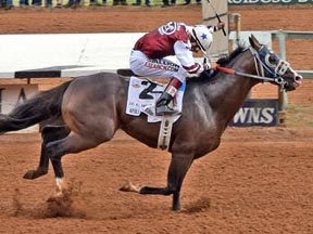 Apollitical Blood winning the All American Derby ©Ruidoso Downs