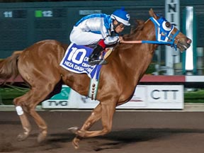 Heza Dasha Fire winning the Champion of Champions ©Los Alamitos