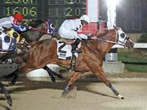 Open Me A Corona winning the Vals Fortune Stakes ©Coady Photography