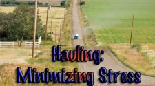 Hauling: Minimizing Transport Stress in Horses