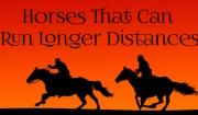Horses That Can Run Longer Distances