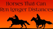 Horses That Can Run Longer Distances