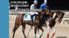 2017 LQHBA Yearling Sale