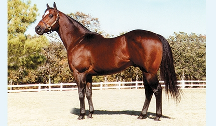 Corona Cartel's Halter Up For Auction