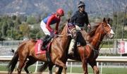 De Alba Saddles First Starter at Santa Anita