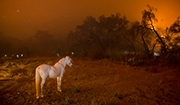 How Does Wildfire Smoke Affect Horse Health?