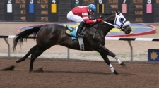 Champion First Moonflash Euthanized at 14