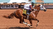 All American Futurity Winner Fly Baby Fly Arrives at Ruidoso