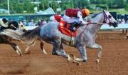 Supreme Race Horses