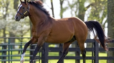 Robicheaux Ranch Inc. and Spendthrift Announce Exclusive Opportunity