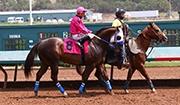 Kleptomaniac Wins All American Derby Shake