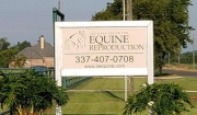 Louisiana Center For Equine Reproduction Collection Days