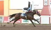 Speedhorse Triple Crown