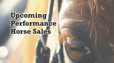 Upcoming Performance Horse Sales