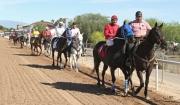 Equine Wellness Program Rillito Park