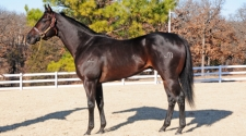 Graded Stakes Sire Rock Solid Jess Dies