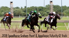Speedhorse Graham Paint & Appaloosa Futurity Trials