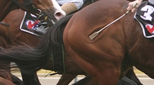 CHRB Votes to Ban Jockeys From Using Whips