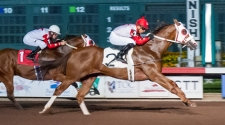 Zoomin For Spuds Named Supreme Race Horse